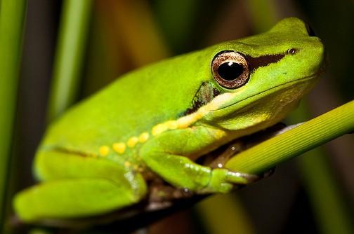 edition et grenouille